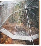 Open umbrella with water drops in the forest Wood Print