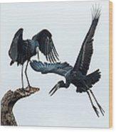 Openbill Storks Flying, Tarangire Wood Print