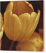 Opening Tulip Flower Golden Monochrome Wood Print