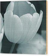 Opening Tulip Flower Teal Monochrome Wood Print