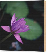 Opening Water Lily Wood Print