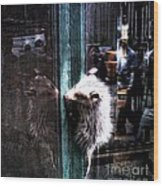 Opossum In The City Wood Print
