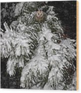 Opossum In The Pines Wood Print