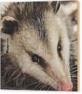 Opossum Wood Print