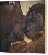 Orangatang Love Wood Print