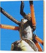 Orange And Black Spider Legs Wood Print