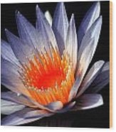Orange And Blue Lily...   # Wood Print