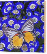 Orange And Gray Butterfly Wood Print