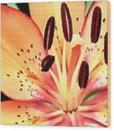Orange And Pink Flower Wood Print