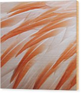 Orange And White Feathers Of A Flamingo Wood Print