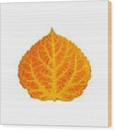 Orange And Yellow Aspen Leaf 3 Wood Print