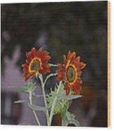 Orange Asters Wood Print