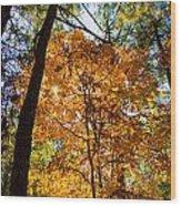 Orange Autumn II Wood Print