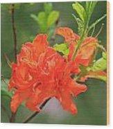 Orange Azalea At Moore State Park Wood Print