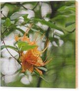 Orange Azalea Delight Wood Print