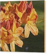 Orange Azaleas Wood Print