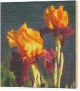 Orange Bearded Irises Wood Print