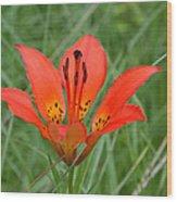 Orange Beauty Wood Print