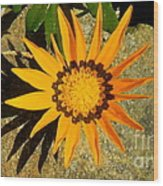 Orange Blossom Malaga Spain Wood Print