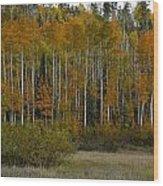 Orange Blossom Special Wood Print