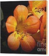 Orange Blossoms Wood Print