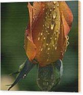 Orange Bud Wood Print