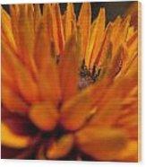 Orange Burst Wood Print