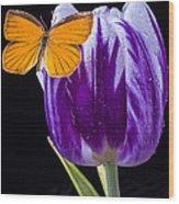 Orange Butterfly On Purple Tulip Wood Print