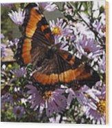 Orange Butterfly/purple Flowers Wood Print