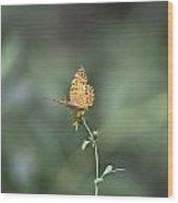 Orange Butterfly V3 Wood Print