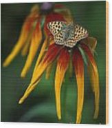 Orange Butterfly With Black Dots Sitting Onthe Red And Yellow Long Petaled Flowers Wood Print