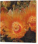 Orange Cactus Wood Print