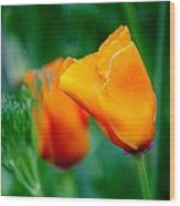 Orange California Poppies Wood Print