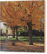 Orange Canopy - Davidson College Wood Print