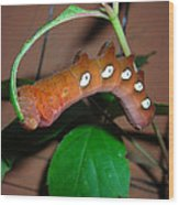 Orange Caterpillar Wood Print