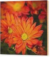 Orange Chrysanthemum Wood Print