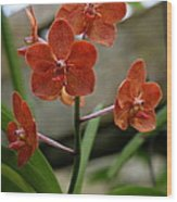 Orange Colored Orchid Wood Print