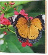 Orange Common Lacewing Butterfly Wood Print