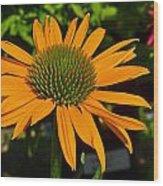 Orange Cone Flower Wood Print