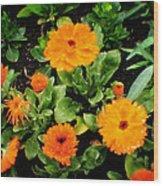 Orange Country Flowers - Series I Wood Print