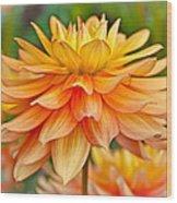 Orange Cream Dahlia Wood Print