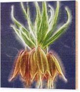 Orange Crown Imperial Flowers Fritillaria Imperialis Wood Print