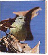 Orange-crowned Warbler - Feather Lite Wood Print