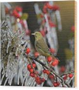 Orange-crowned Warbler (vermivora Celata Wood Print