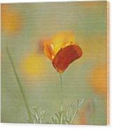 Orange Crush - California Poppy Wood Print