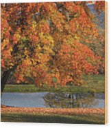 Orange Crush Wood Print