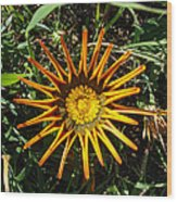 Orange Curl Wood Print