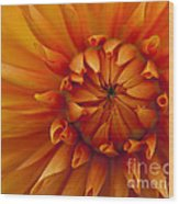 Orange Dahlia Close Up Wood Print