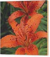 Orange Day Lilies Wood Print