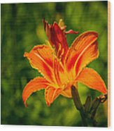 Orange Daylily Flower 3 Wood Print